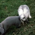 Thumper and Princess, the bunnies