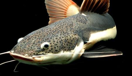 Two Catfishing Stories